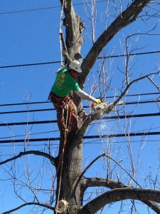 Tree Trimming Toms River