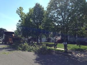 Brick Tree Service